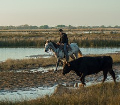 Assister à un spectacle de chevaux en Camargue à Aigues-Mortes