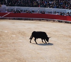 Découvrir le toro piscine près de Aigues-Mortes
